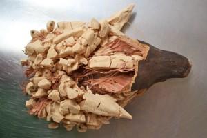 Le fruit du baobab bio ou pain de singe ouvet