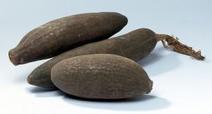 Le fruit du Baobab Bio
